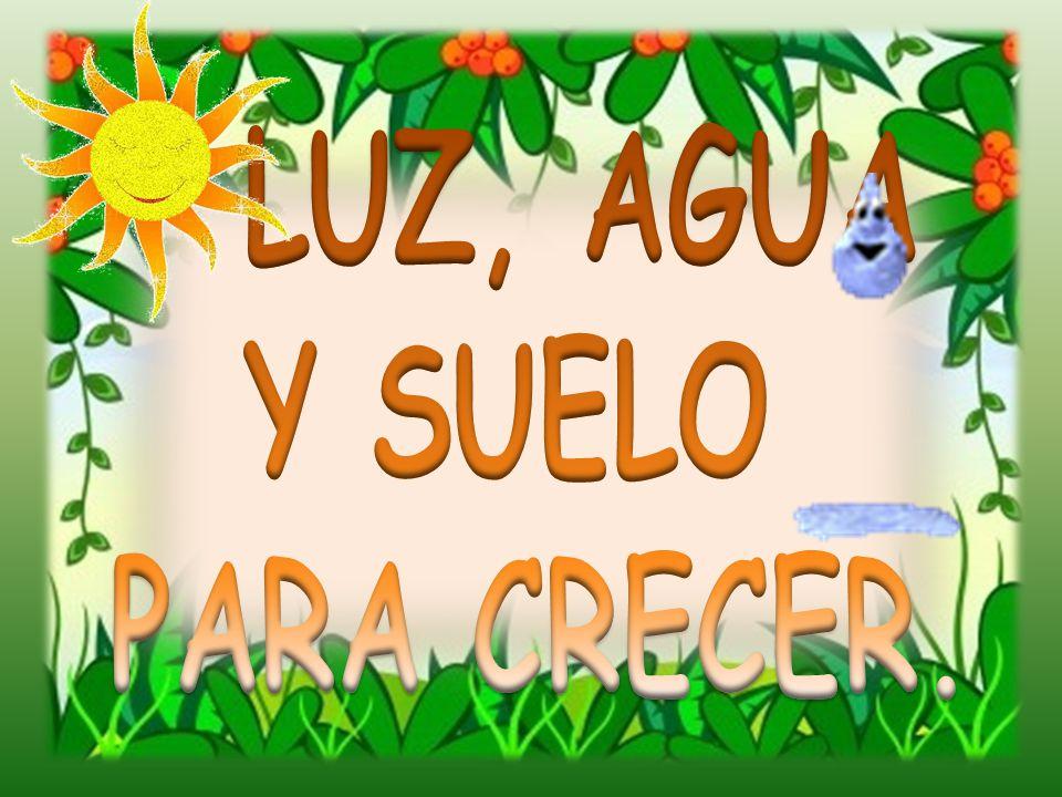 LUZ, AGUA Y SUELO PARA CRECER.