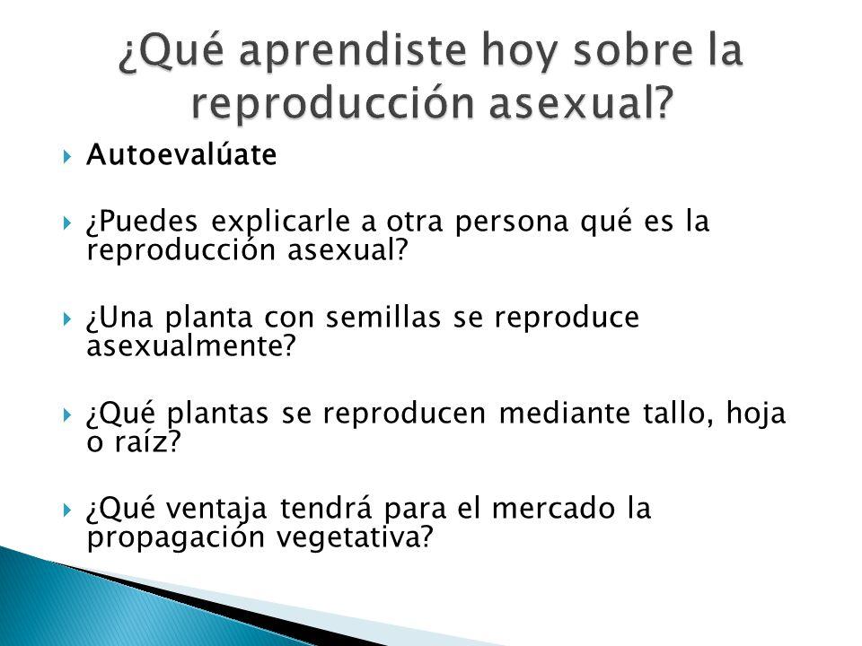 ¿Qué aprendiste hoy sobre la reproducción asexual