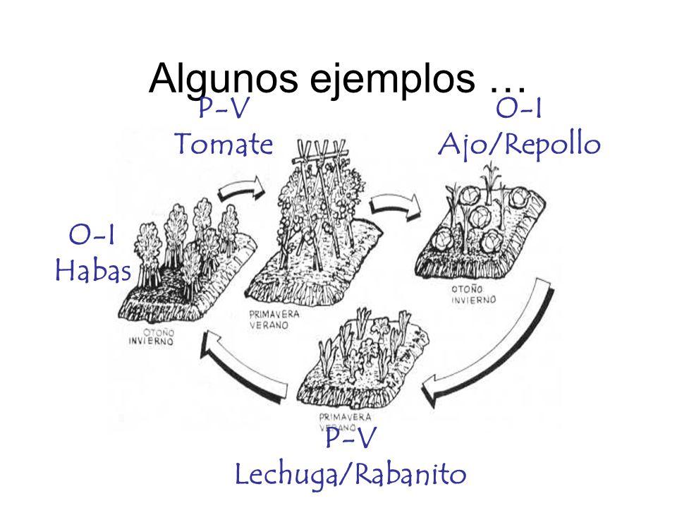 Algunos ejemplos … P-V Tomate O-I Ajo/Repollo O-I Habas P-V
