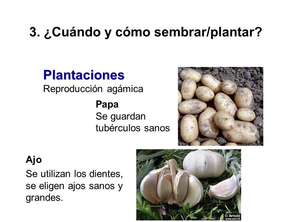 3. ¿Cuándo y cómo sembrar/plantar