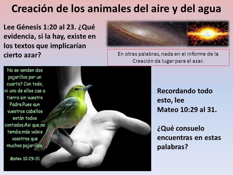 Creación de los animales del aire y del agua