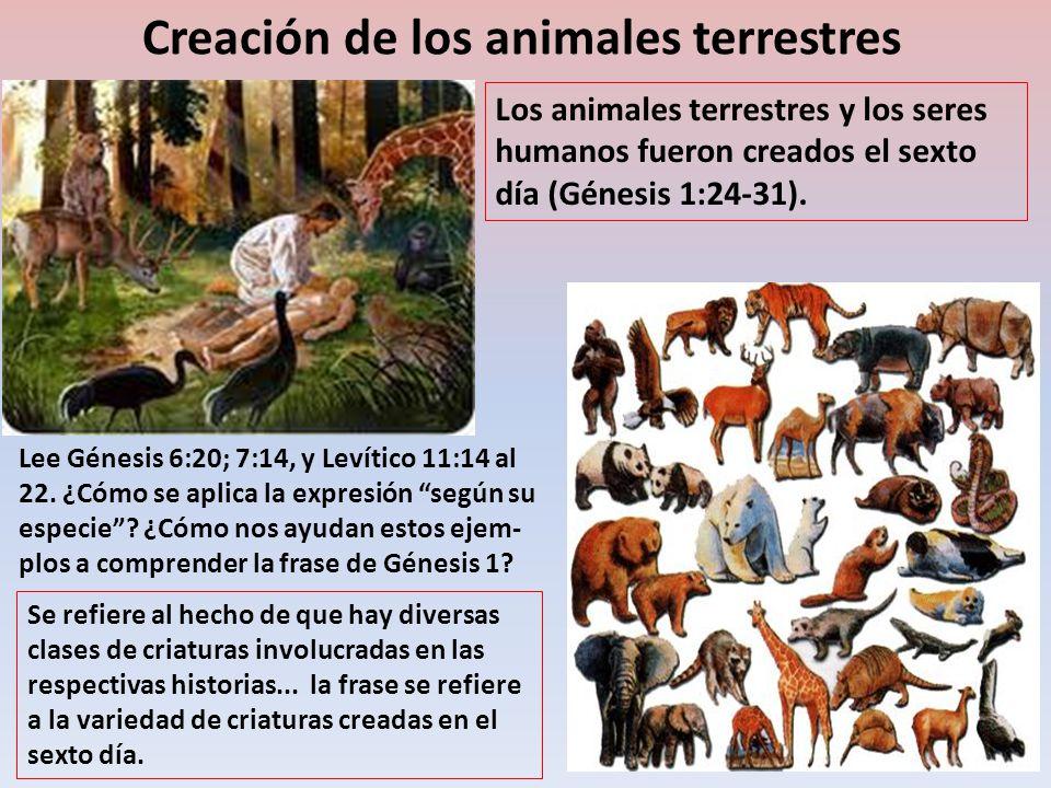 Creación de los animales terrestres