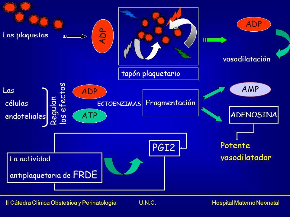 PGI2 ADP ADP AMP ADP los efectos Regulan ATP Potente vasodilatador