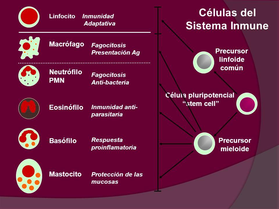 Célula pluripotencial