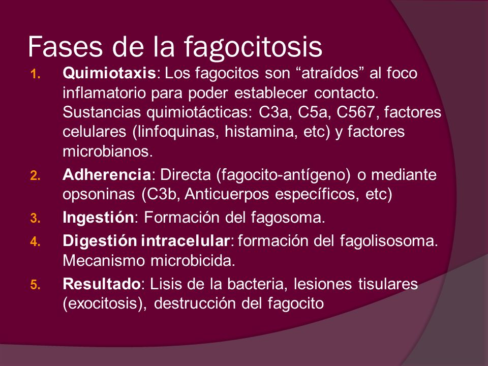 Fases de la fagocitosis