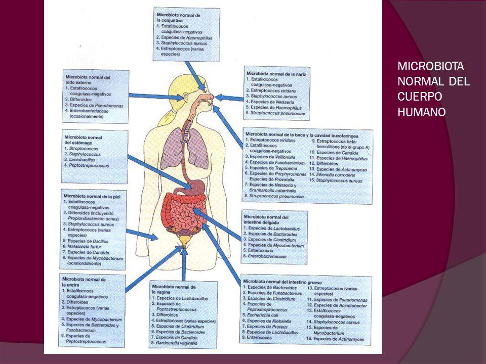 MICROBIOTA NORMAL DEL CUERPO HUMANO