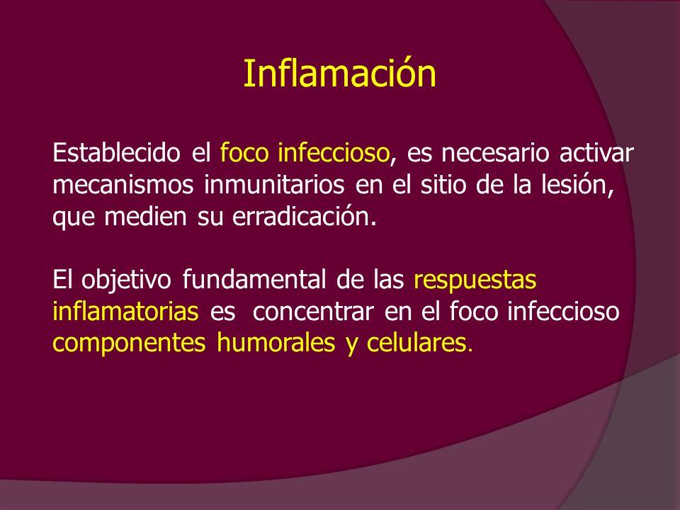 Inflamación Establecido el foco infeccioso, es necesario activar mecanismos inmunitarios en el sitio de la lesión, que medien su erradicación.
