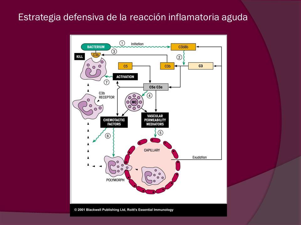 Estrategia defensiva de la reacción inflamatoria aguda