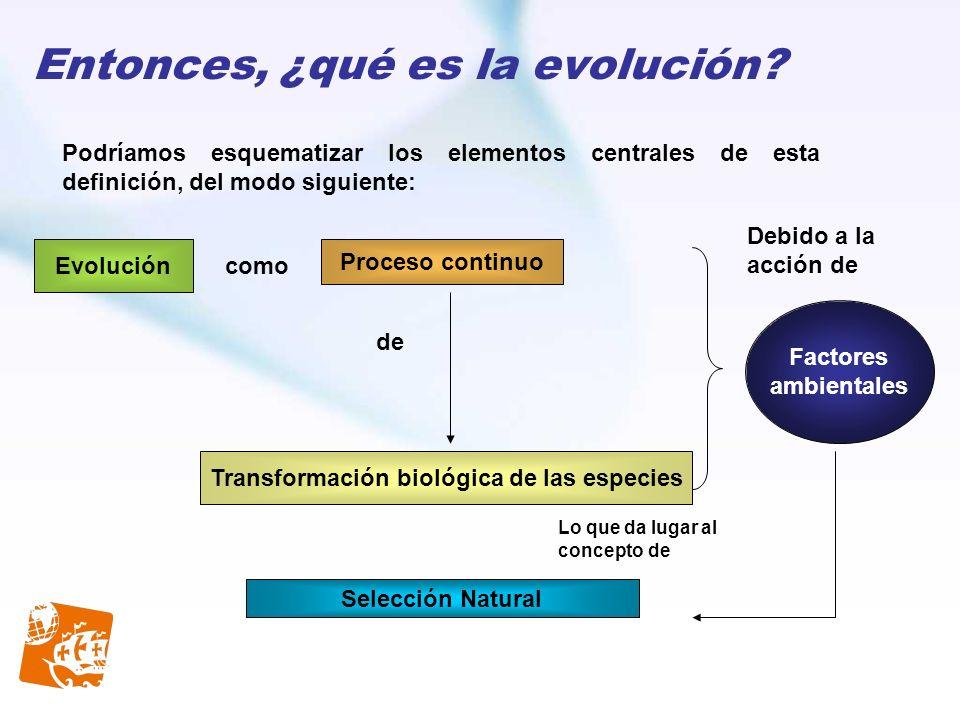 Entonces, ¿qué es la evolución