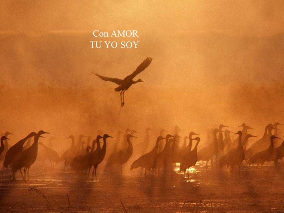 Con AMOR TU YO SOY