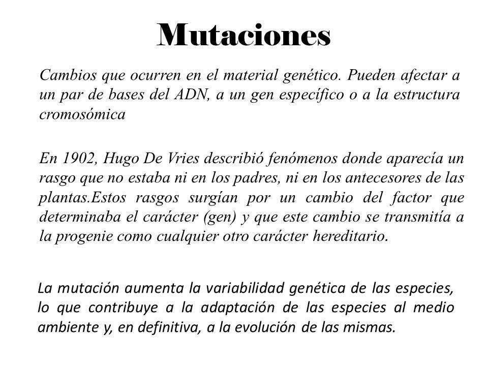Mutaciones Cambios que ocurren en el material genético. Pueden afectar a un par de bases del ADN, a un gen específico o a la estructura cromosómica.