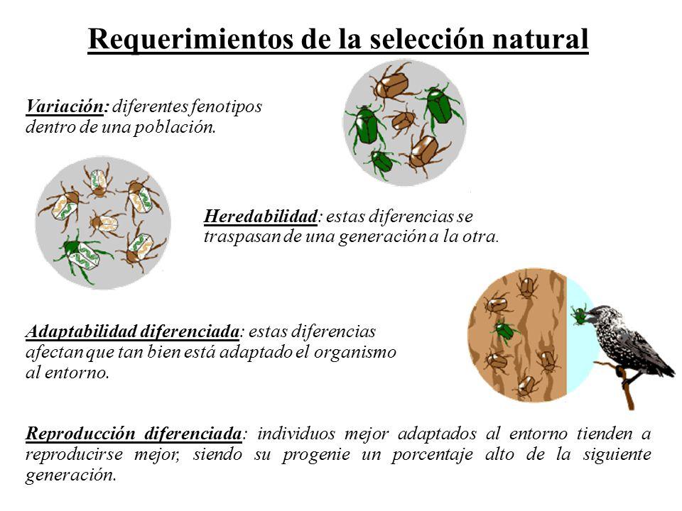 Requerimientos de la selección natural