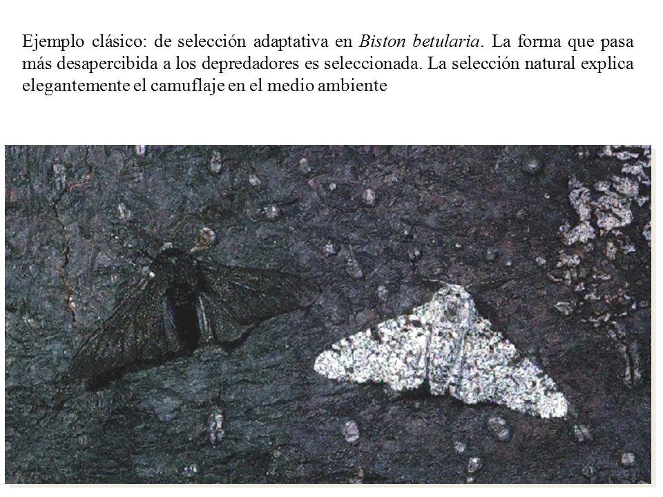 Ejemplo clásico: de selección adaptativa en Biston betularia