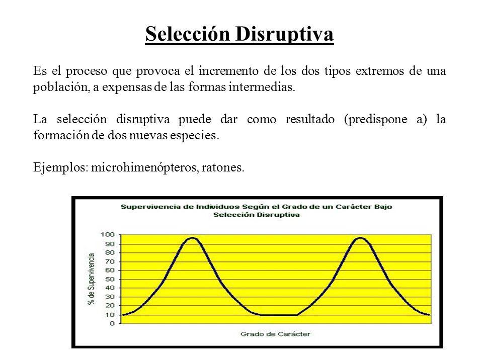 Selección Disruptiva Es el proceso que provoca el incremento de los dos tipos extremos de una población, a expensas de las formas intermedias.