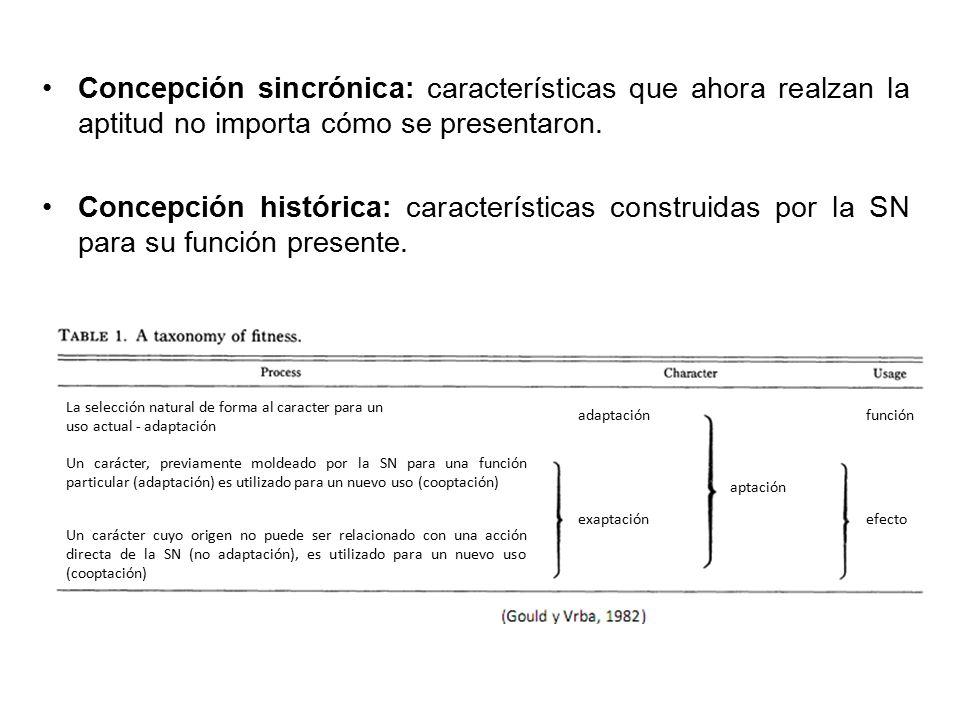 Concepción sincrónica: características que ahora realzan la aptitud no importa cómo se presentaron.