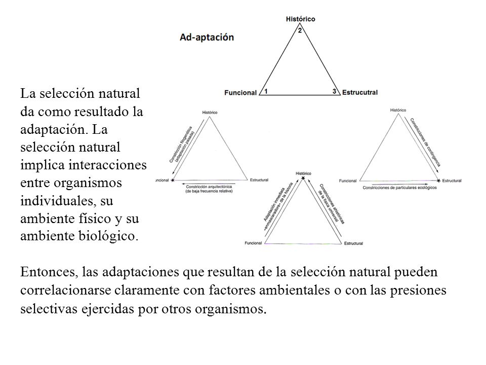 La selección natural da como resultado la adaptación