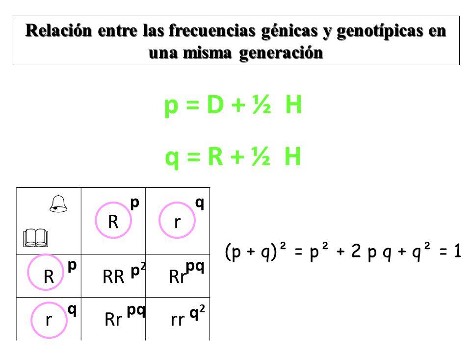 p = D + ½ H q = R + ½ H   R r RR Rr rr
