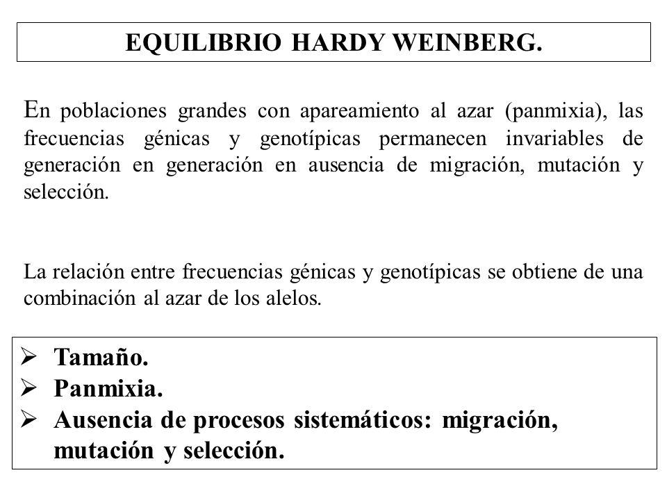 EQUILIBRIO HARDY WEINBERG.
