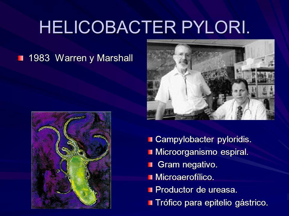 HELICOBACTER PYLORI. 1983 Warren y Marshall Campylobacter pyloridis.