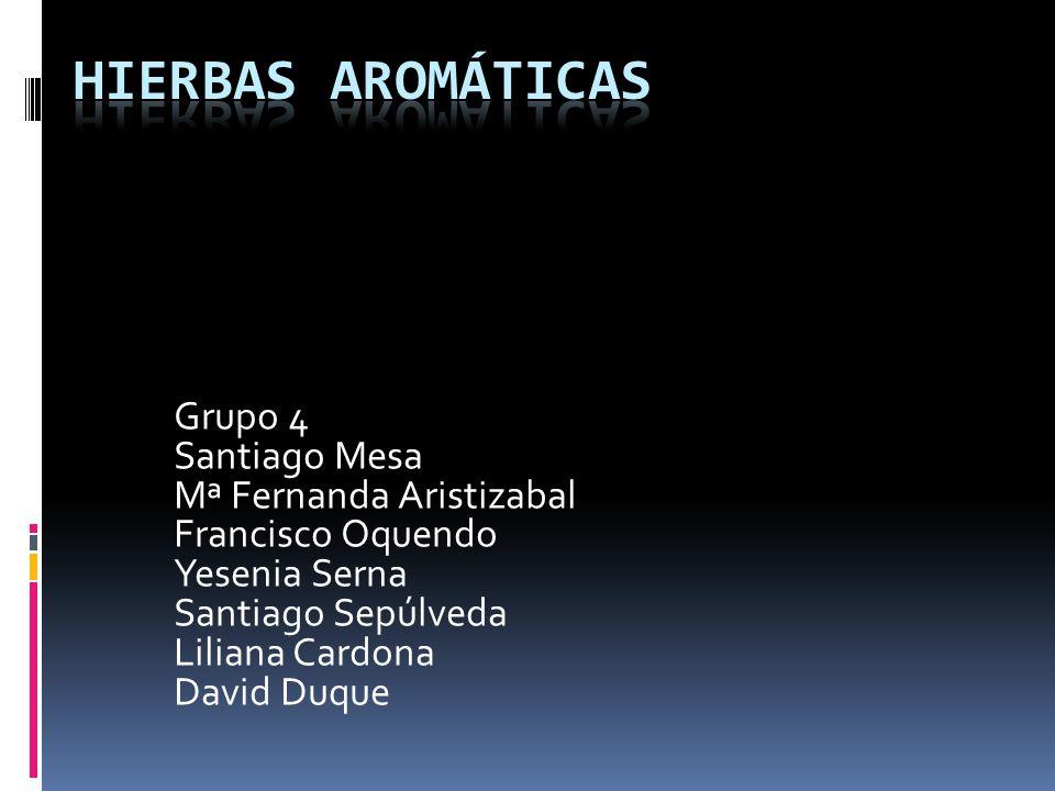 Hierbas aromáticas Grupo 4 Santiago Mesa Mª Fernanda Aristizabal