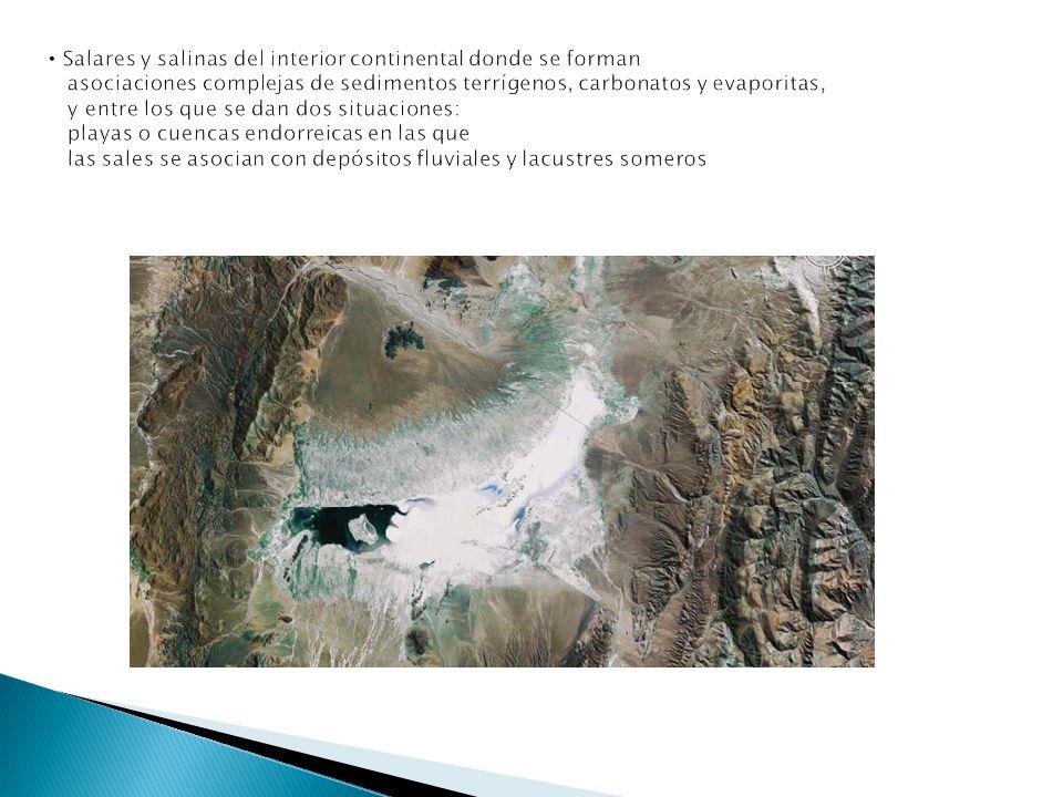 Salares y salinas del interior continental donde se forman asociaciones complejas de sedimentos terrígenos, carbonatos y evaporitas, y entre los que se dan dos situaciones: playas o cuencas endorreicas en las que las sales se asocian con depósitos fluviales y lacustres someros