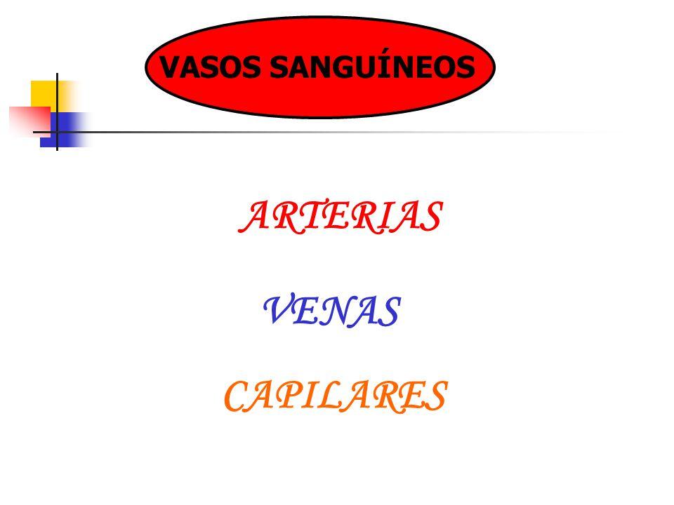 VASOS SANGUÍNEOS ARTERIAS VENAS CAPILARES