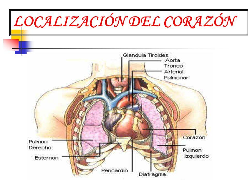 Contemporáneo Ubicación Del Corazón En Diagrama De Cuerpo Festooning ...