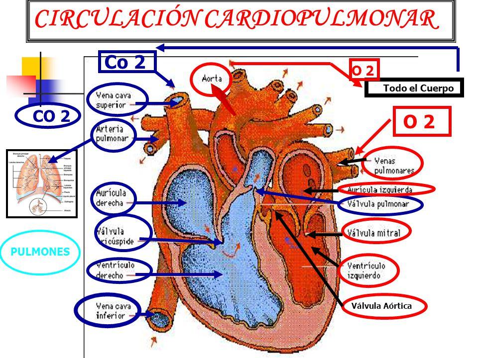 CIRCULACIÓN CARDIOPULMONAR