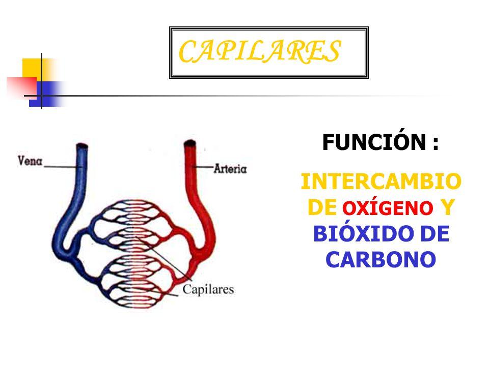 INTERCAMBIO DE OXÍGENO Y BIÓXIDO DE CARBONO