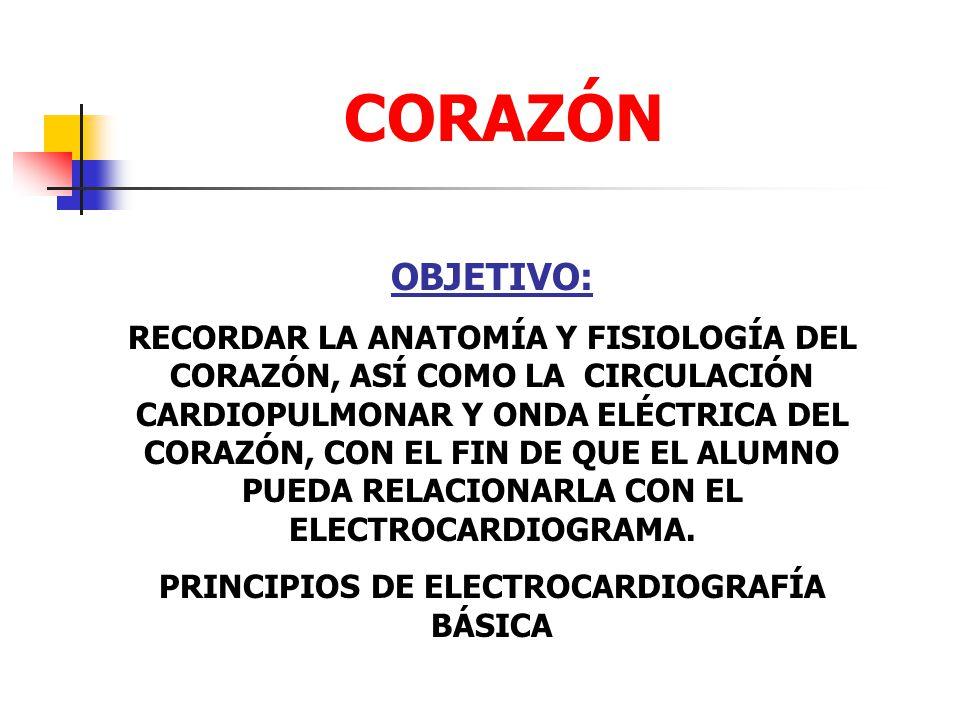 PRINCIPIOS DE ELECTROCARDIOGRAFÍA BÁSICA
