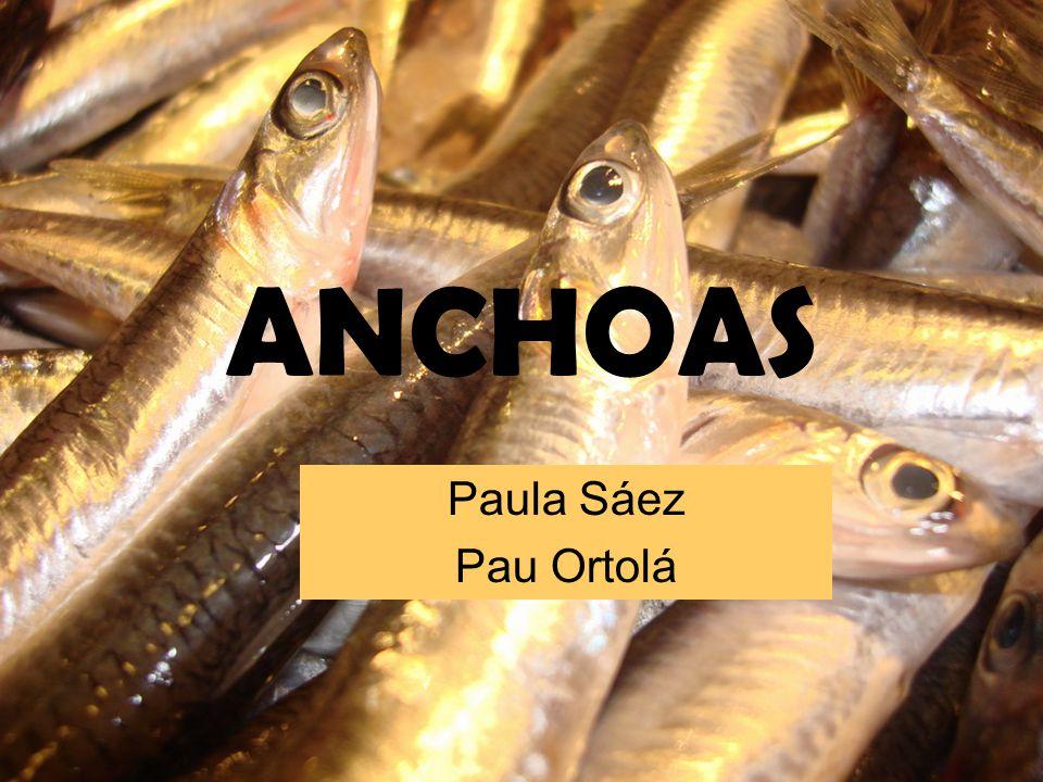 ANCHOAS Paula Sáez Pau Ortolá