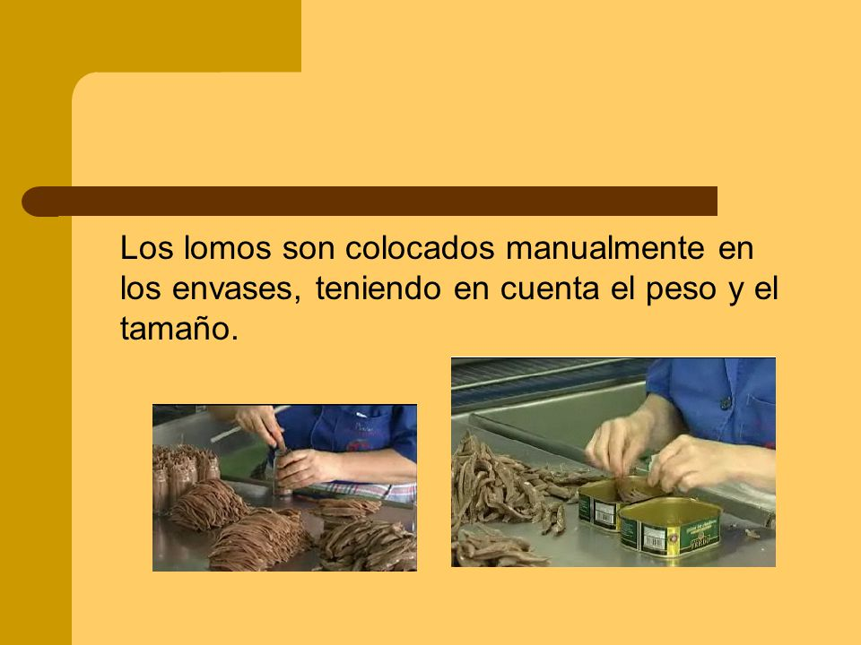 Los lomos son colocados manualmente en los envases, teniendo en cuenta el peso y el tamaño.