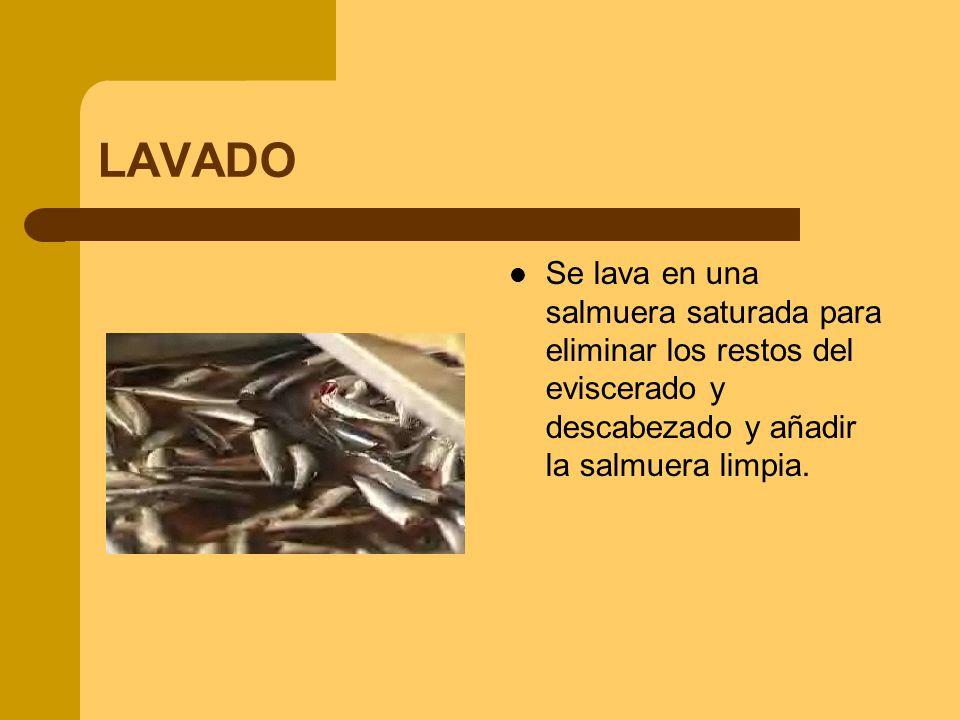 LAVADO Se lava en una salmuera saturada para eliminar los restos del eviscerado y descabezado y añadir la salmuera limpia.