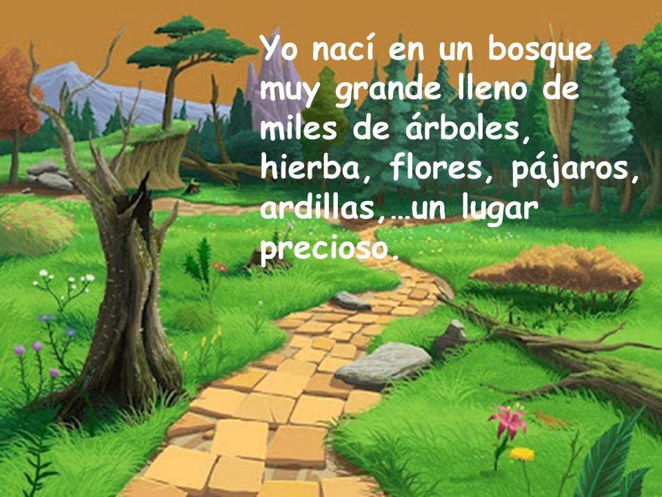 Yo nací en un bosque muy grande lleno de miles de árboles, hierba, flores, pájaros,