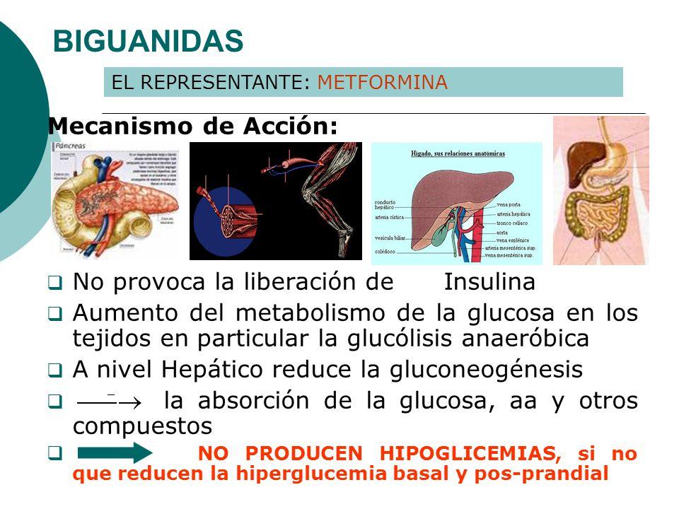 BIGUANIDAS Mecanismo de Acción: No provoca la liberación de Insulina