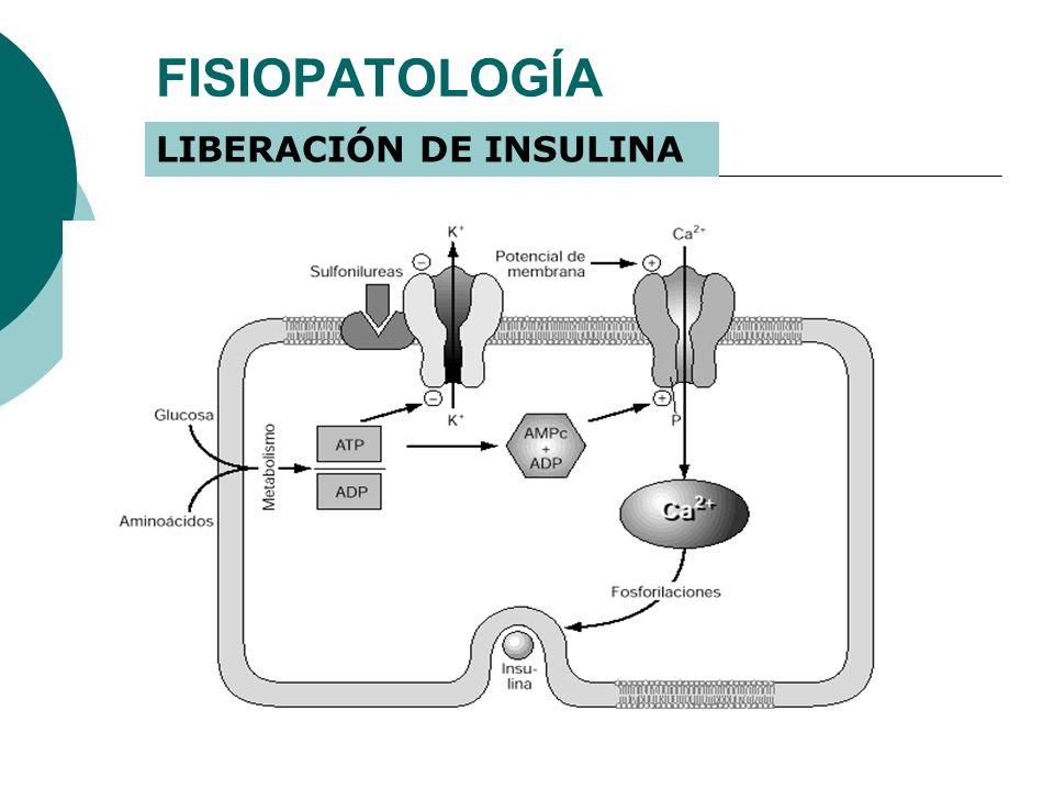 FISIOPATOLOGÍA LIBERACIÓN DE INSULINA