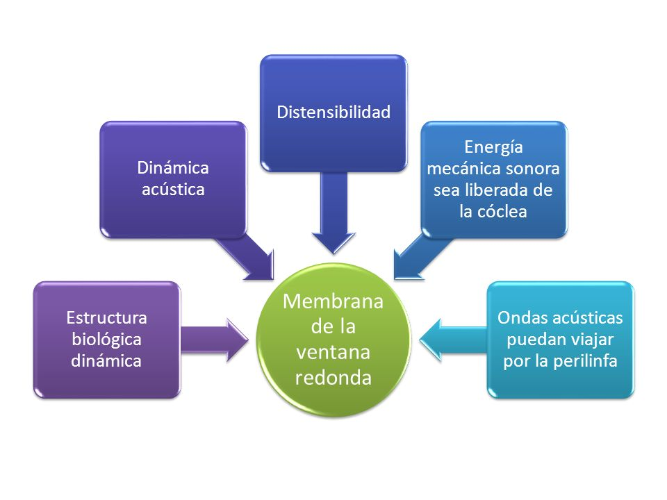 Membrana de la ventana redonda Estructura biológica dinámica