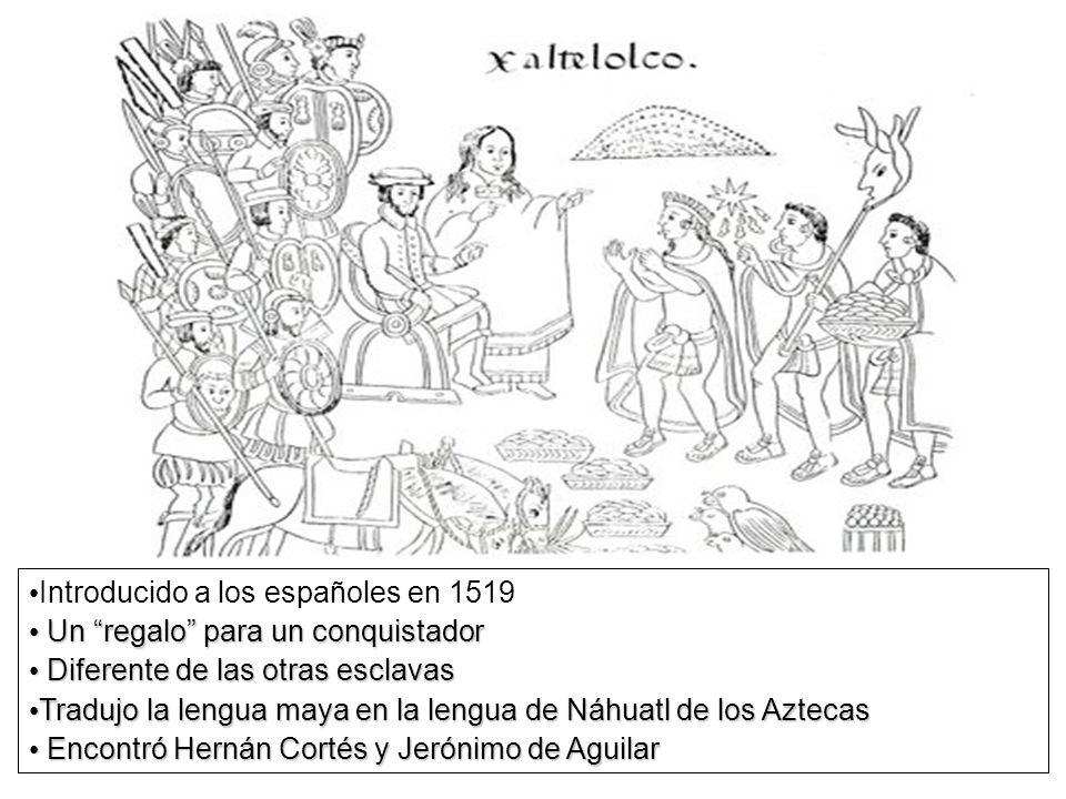 Introducido a los españoles en 1519