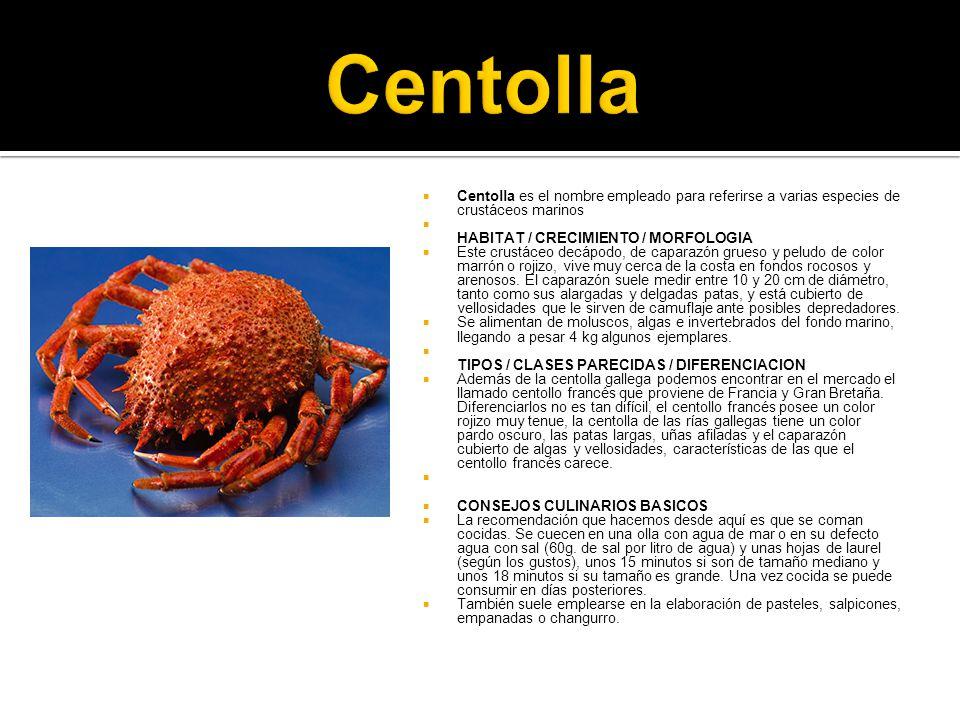 Centolla Centolla es el nombre empleado para referirse a varias especies de crustáceos marinos. HABITAT / CRECIMIENTO / MORFOLOGIA.