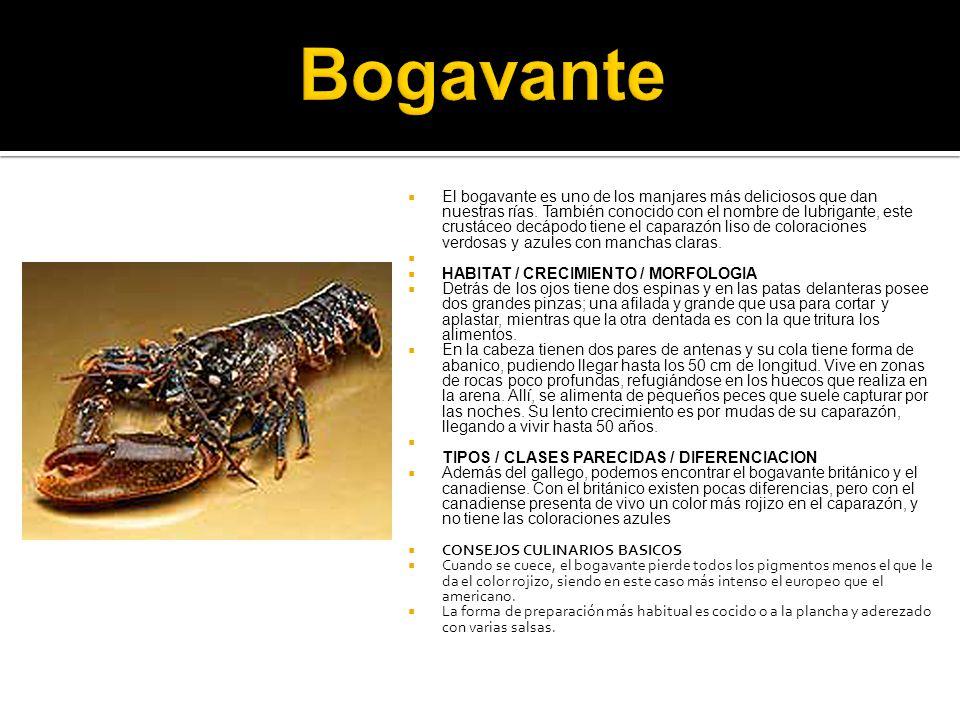 Bogavante