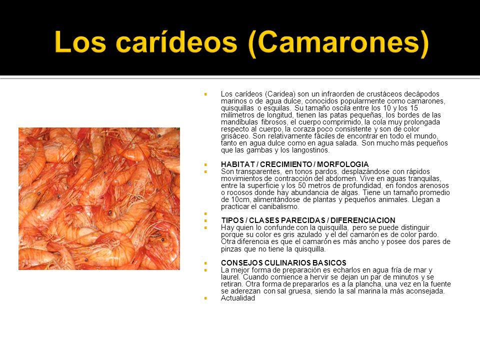 Los carídeos (Camarones)