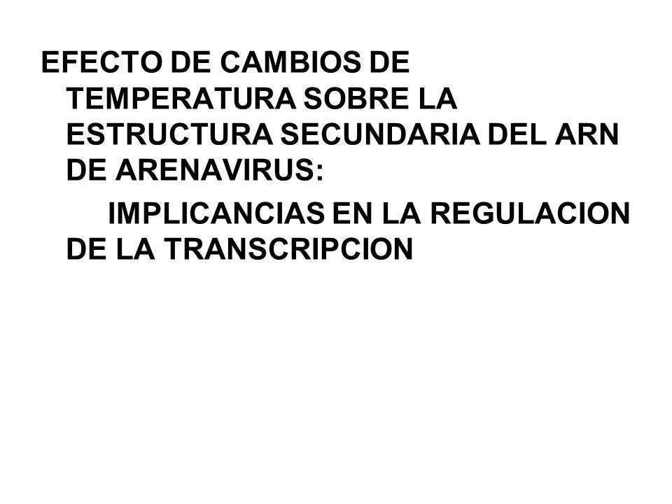 EFECTO DE CAMBIOS DE TEMPERATURA SOBRE LA ESTRUCTURA SECUNDARIA DEL ARN DE ARENAVIRUS: