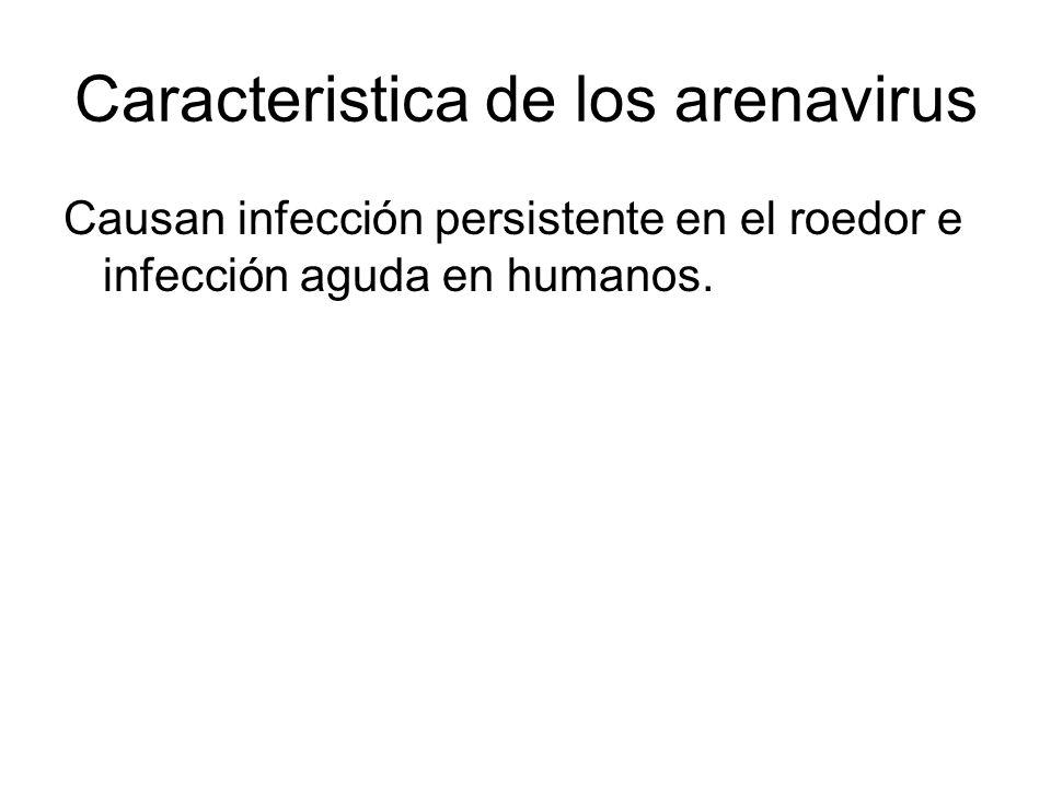 Caracteristica de los arenavirus