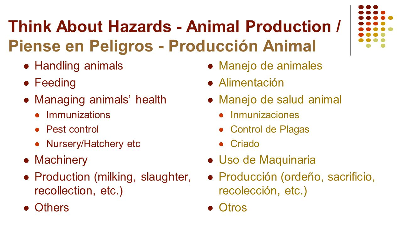 Think About Hazards - Animal Production / Piense en Peligros - Producción Animal