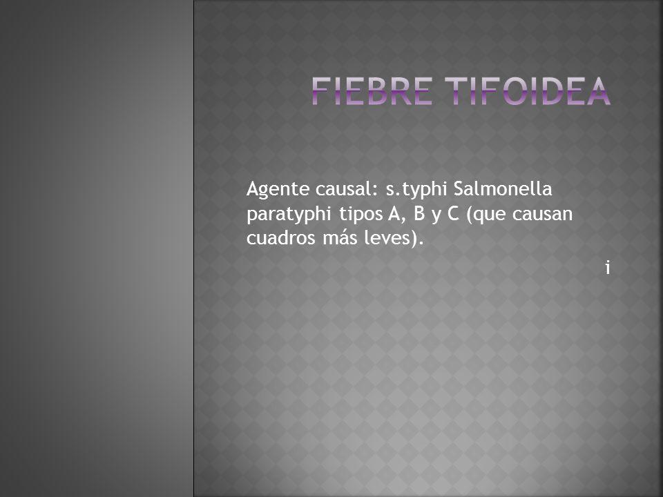 Fiebre tifoidea Agente causal: s.typhi Salmonella paratyphi tipos A, B y C (que causan cuadros más leves).