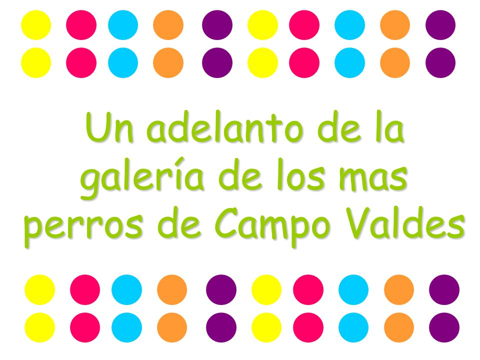 Un adelanto de la galería de los mas perros de Campo Valdes