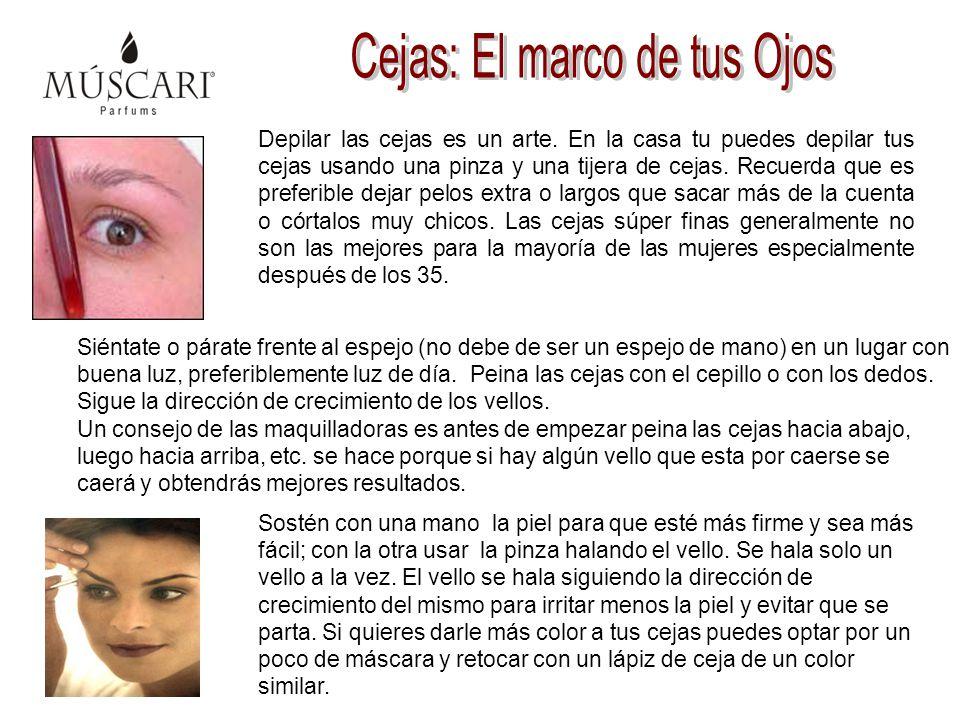 Cejas: El marco de tus Ojos