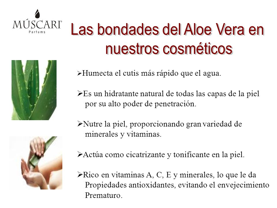Las bondades del Aloe Vera en
