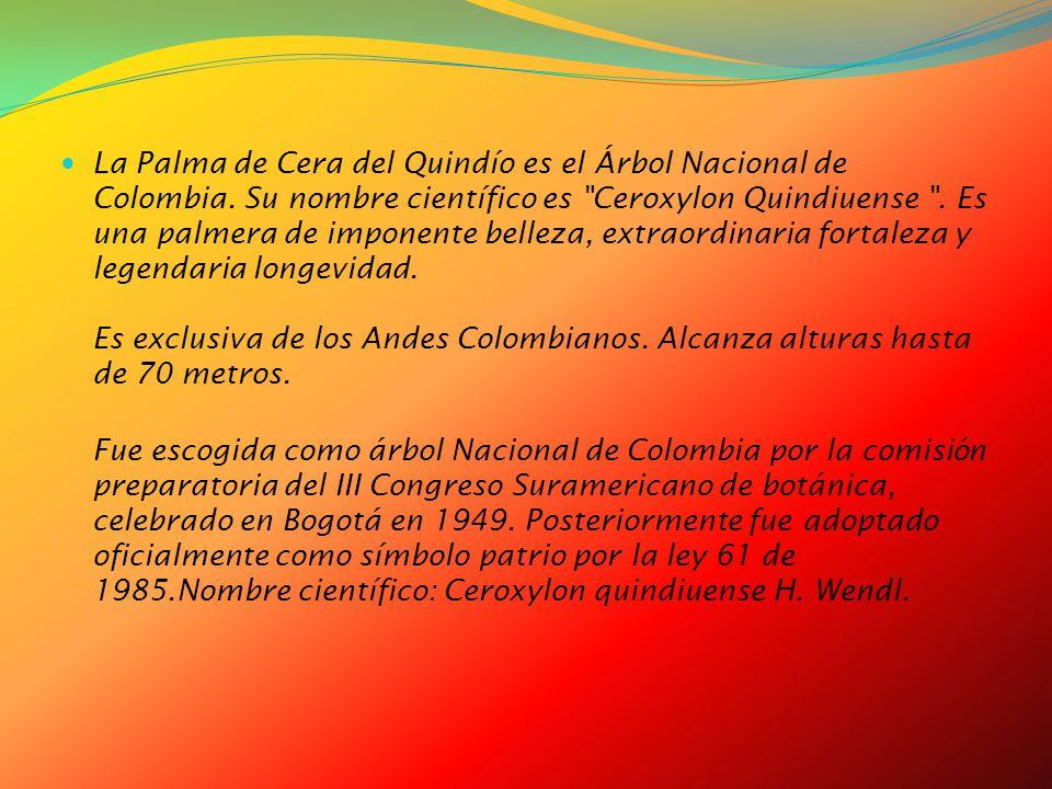 La Palma de Cera del Quindío es el Árbol Nacional de Colombia