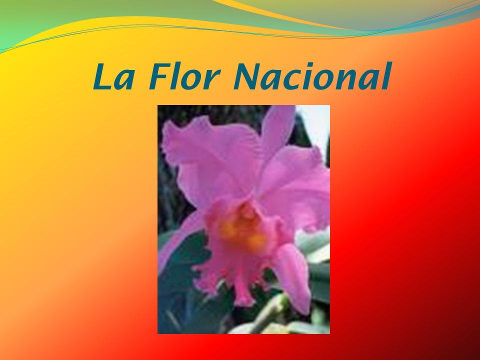 La Flor Nacional
